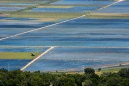 Reisfelder in Vejer d.l.F.